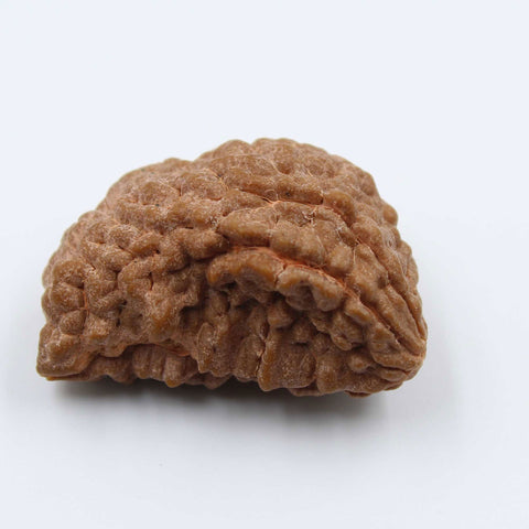 Natural One Face Rudraksha 3.110gms / 26.83mm Kaju shape Rudraksha Certified by IGL @ Ajretail - 1 Mukhi Rudraksha