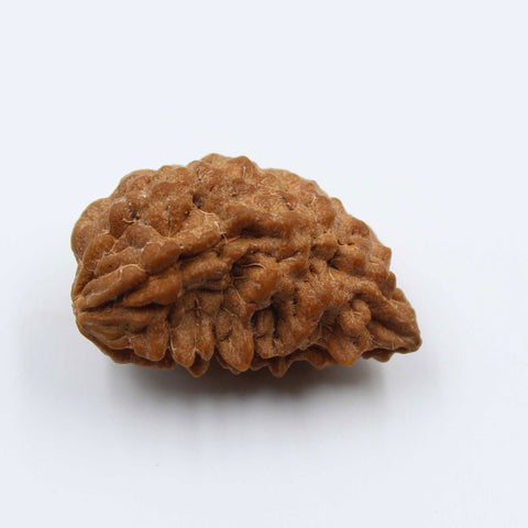Natural One Face Rudraksha 2.460gms / 24.27mm Kaju shape Rudraksha Certified by IGL @ Ajretail - 1 Mukhi Rudraksha