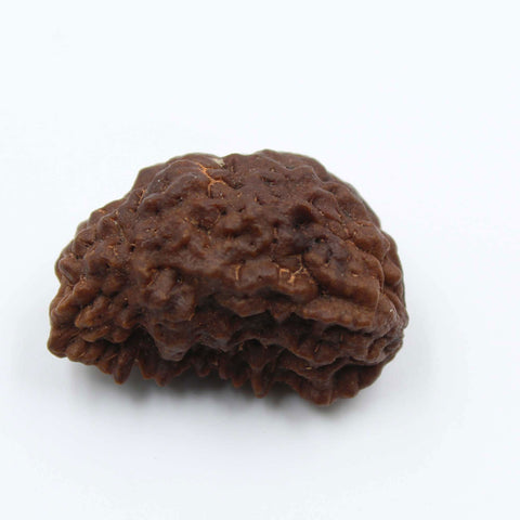 Natural One Face Rudraksha 3.342gms / 25.21mm Kaju shape Rudraksha Certified by IGL @ Ajretail - 1 Mukhi Rudraksha