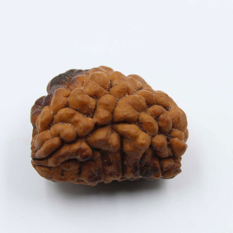 Natural One Face Rudraksha 2.854gms / 25.24mm Kaju shape Rudraksha Certified by IGL @ Ajretail - 1 Mukhi Rudraksha