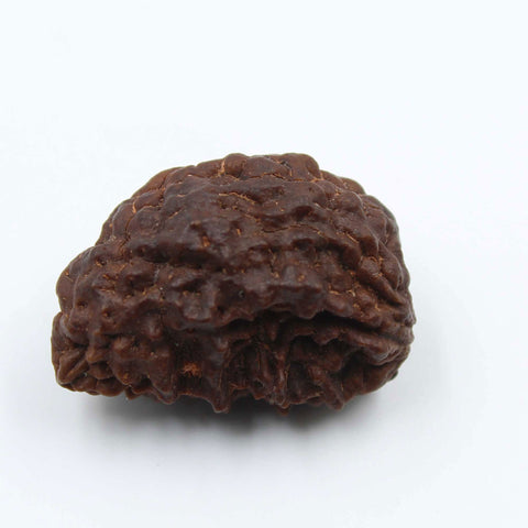 Natural One Face Rudraksha 3.464gms / 25.21mm Kaju shape Rudraksha Certified by IGL @ Ajretail - 1 Mukhi Rudraksha