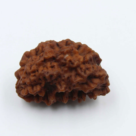Natural One Face Rudraksha 3.184gms / 25.20mm Kaju shape Rudraksha Certified by IGL @ Ajretail - 1 Mukhi Rudraksha