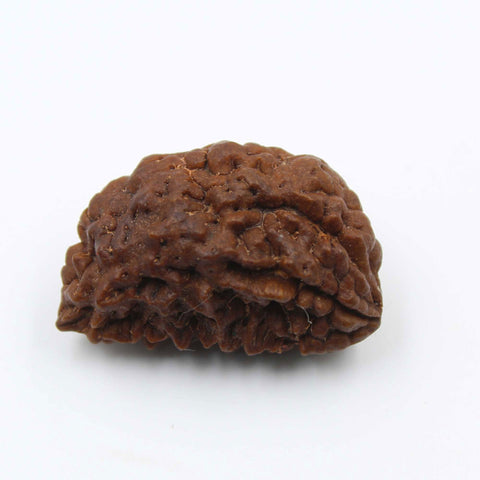 Natural One Face Rudraksha 2.760gms / 25.00mm Kaju shape Rudraksha Certified by IGL @ Ajretail - 1 Mukhi Rudraksha
