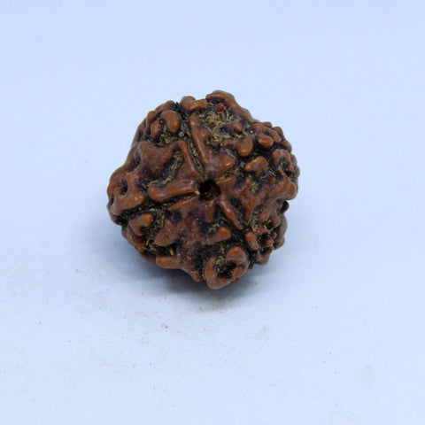 15.00mm to 22.00mm (approx) Natural 4 Mukhi Rudraksha Energized Bead IGL certified - 4RDSEED40 - 1 Mukhi Rudraksha