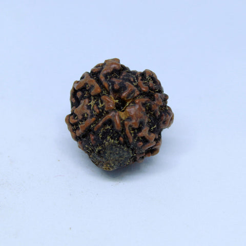 15.00mm to 22.00mm (approx) Natural 4 Mukhi Rudraksha Energized Bead IGL certified - 4RDSEED46 - 1 Mukhi Rudraksha