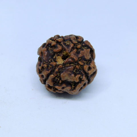 15.00mm to 22.00mm (approx) Natural 4 Mukhi Rudraksha Energized Bead IGL certified - 4RDSEED47 - 1 Mukhi Rudraksha