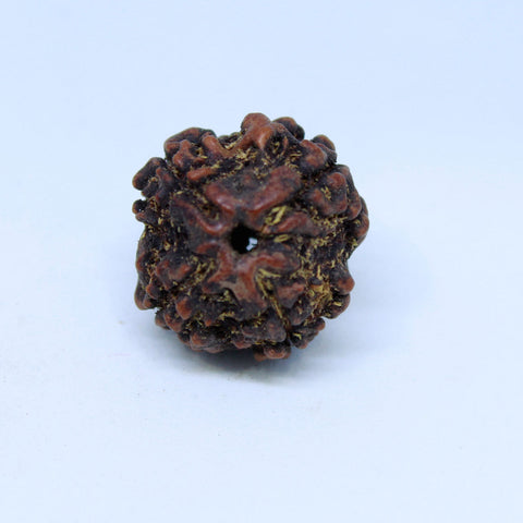 15.00mm to 22.00mm (approx) Natural 4 Mukhi Rudraksha Energized Bead IGL certified - 4RDSEED48 - 1 Mukhi Rudraksha