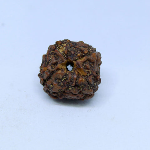 15.00mm to 22.00mm (approx) Natural 4 Mukhi Rudraksha Energized Bead IGL certified - 4RDSEED49 - 1 Mukhi Rudraksha