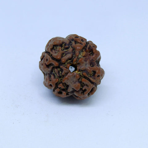 15.00mm to 22.00mm (approx) Natural 4 Mukhi Rudraksha Energized Bead IGL certified - 4RDSEED58 - 1 Mukhi Rudraksha
