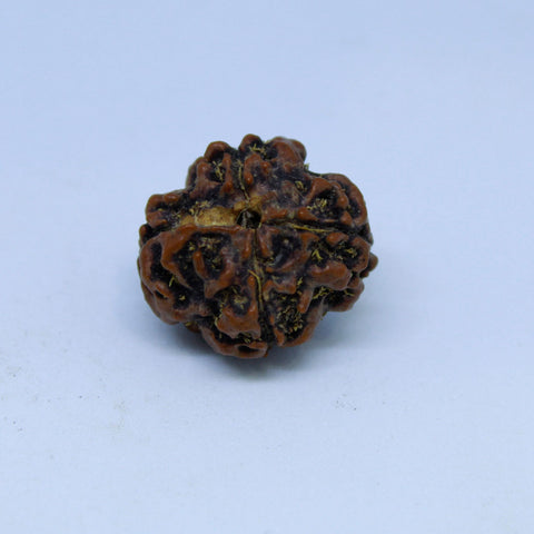 15.00mm to 22.00mm (approx) Natural 4 Mukhi Rudraksha Energized Bead IGL certified - 4RDSEED59 - 1 Mukhi Rudraksha