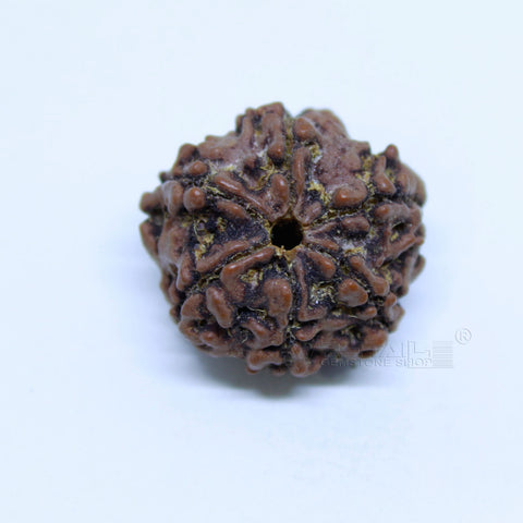 14.00mm to 20.00mm (approx) Natural 6 Face Rudraksha IGL certified - 6MKH_RDR_AJ34 - 1 Mukhi Rudraksha
