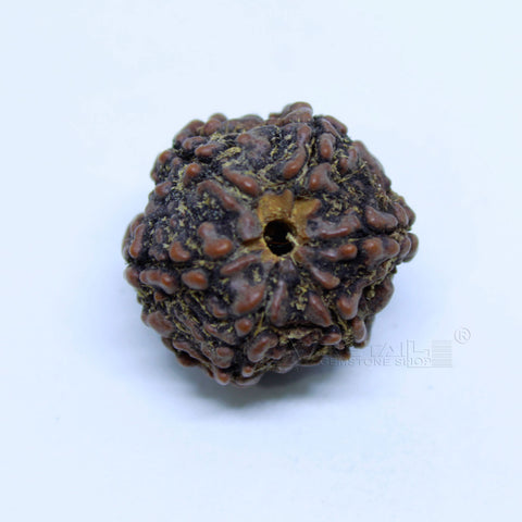 14.00mm to 20.00mm (approx) Natural 6 Face Rudraksha IGL certified - 6MKH_RDR_AJ42 - 1 Mukhi Rudraksha