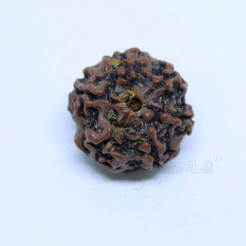 14.00mm to 20.00mm (approx) Natural 6 Face Rudraksha IGL certified - 6MKH_RDR_AJ50 - 1 Mukhi Rudraksha
