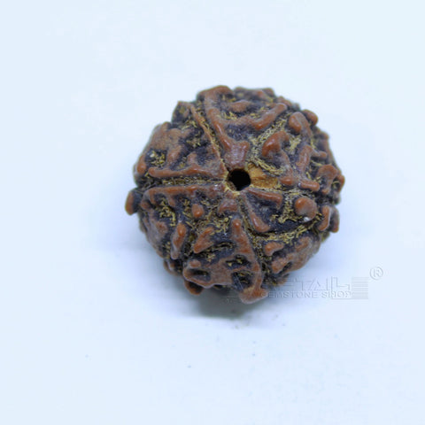 14.00mm to 20.00mm (approx) Natural 6 Face Rudraksha IGL certified - 6MKH_RDR_AJ51 - 1 Mukhi Rudraksha
