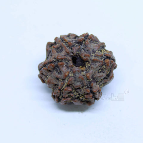 14.00mm to 20.00mm (approx) Natural 6 Face Rudraksha IGL certified - 6MKH_RDR_AJ55 - 1 Mukhi Rudraksha