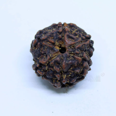 14.00mm to 20.00mm (approx) Natural 6 Face Rudraksha IGL certified - 6MKH_RDR_AJ56 - 1 Mukhi Rudraksha