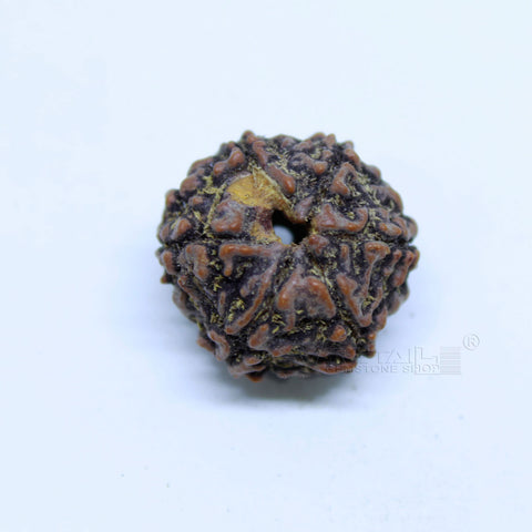 14.00mm to 20.00mm (approx) Natural 6 Face Rudraksha IGL certified - 6MKH_RDR_AJ61 - 1 Mukhi Rudraksha