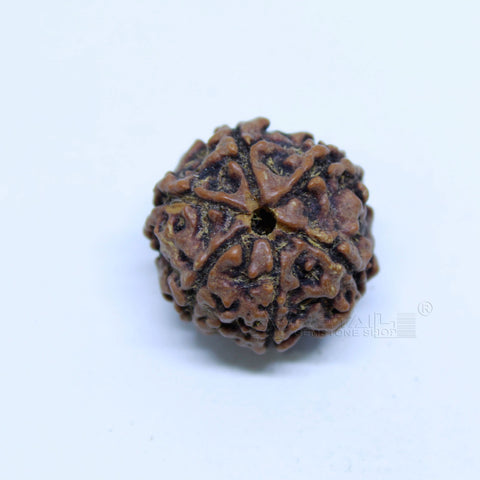 14.00mm to 20.00mm (approx) Natural 6 Face Rudraksha IGL certified - 6MKH_RDR_AJ63 - 1 Mukhi Rudraksha