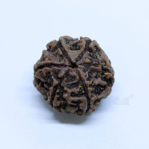 14.00mm to 20.00mm (approx) Natural 6 Face Rudraksha IGL certified - 6MKH_RDR_AJ1 - 1 Mukhi Rudraksha