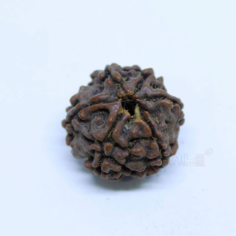 14.00mm to 20.00mm (approx) Natural 6 Face Rudraksha IGL certified - 6MKH_RDR_AJ68 - 1 Mukhi Rudraksha
