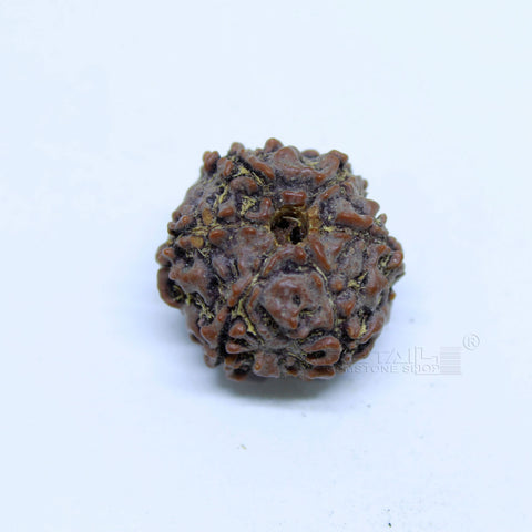 14.00mm to 20.00mm (approx) Natural 6 Face Rudraksha IGL certified - 6MKH_RDR_AJ70 - 1 Mukhi Rudraksha