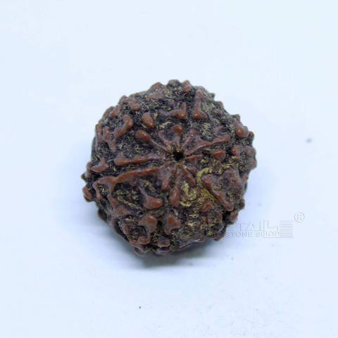 14.00mm to 20.00mm (approx) Natural 6 Face Rudraksha IGL certified - 6MKH_RDR_AJ71 - 1 Mukhi Rudraksha