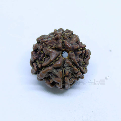 14.00mm to 20.00mm (approx) Natural 6 Face Rudraksha IGL certified - 6MKH_RDR_AJ72 - 1 Mukhi Rudraksha