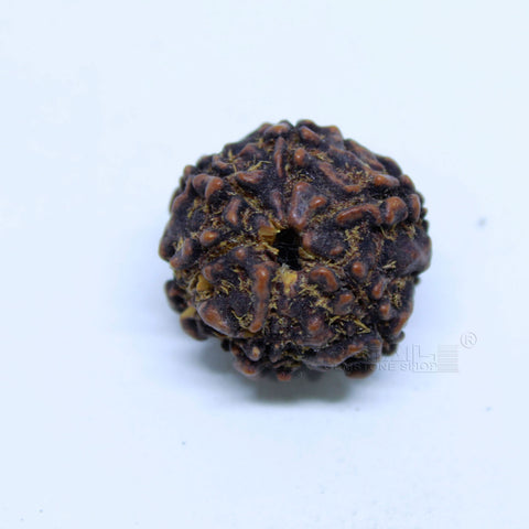 14.00mm to 20.00mm (approx) Natural 6 Face Rudraksha IGL certified - 6MKH_RDR_AJ83 - 1 Mukhi Rudraksha