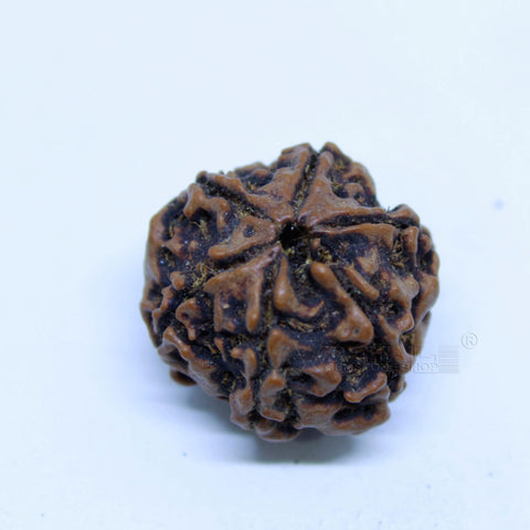 14.00mm to 20.00mm (approx) Natural 6 Face Rudraksha IGL certified - 6MKH_RDR_AJ87 - 1 Mukhi Rudraksha