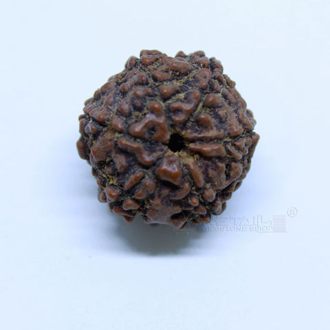 14.00mm to 20.00mm (approx) Natural 6 Face Rudraksha IGL certified - 6MKH_RDR_AJ9 - 1 Mukhi Rudraksha