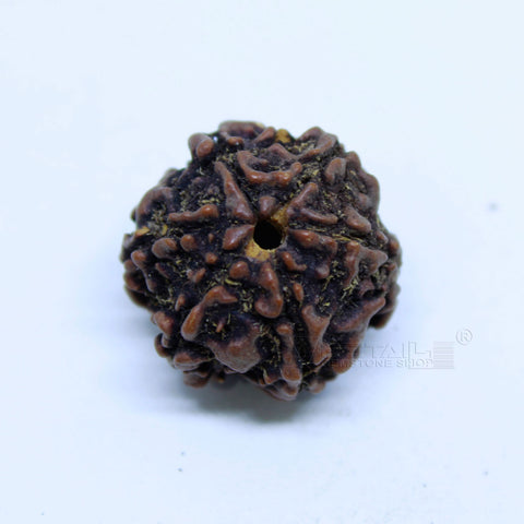 14.00mm to 20.00mm (approx) Natural 6 Face Rudraksha IGL certified - 6MKH_RDR_AJ90 - 1 Mukhi Rudraksha