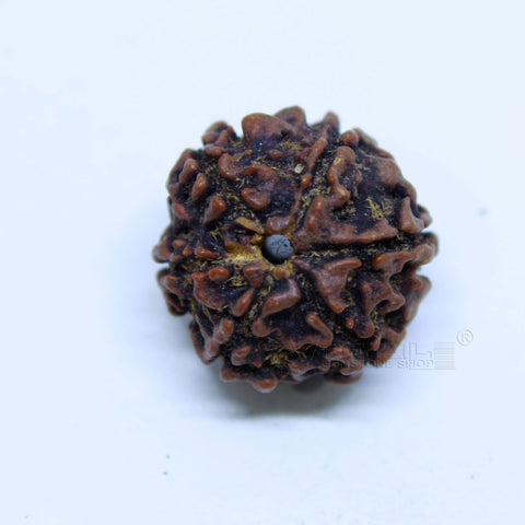 14.00mm to 20.00mm (approx) Natural 6 Face Rudraksha IGL certified - 6MKH_RDR_AJ94 - 1 Mukhi Rudraksha
