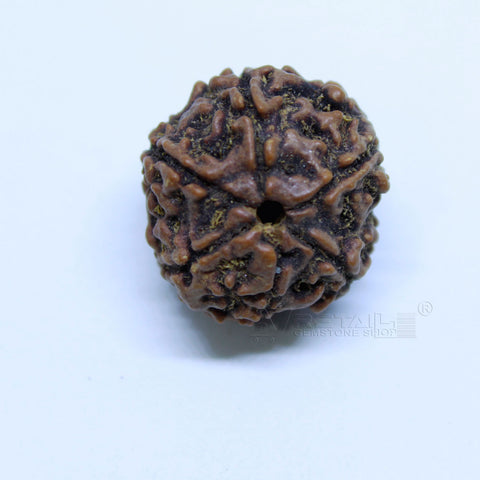 14.00mm to 20.00mm (approx) Natural 6 Face Rudraksha IGL certified - 6MKH_RDR_AJ10 - 1 Mukhi Rudraksha