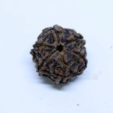 14.00mm to 20.00mm (approx) Natural 6 Face Rudraksha IGL certified - 6MKH_RDR_AJ98 - 1 Mukhi Rudraksha