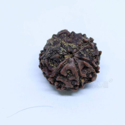 14.00mm to 20.00mm (approx) Natural 6 Face Rudraksha IGL certified - 6MKH_RDR_AJ14 - 1 Mukhi Rudraksha