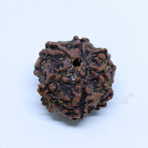 14.00mm to 20.00mm (approx) Natural 6 Face Rudraksha IGL certified - 6MKH_RDR_AJ18 - 1 Mukhi Rudraksha