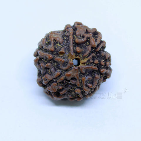 14.00mm to 20.00mm (approx) Natural 6 Face Rudraksha IGL certified - 6MKH_RDR_AJ22 - 1 Mukhi Rudraksha