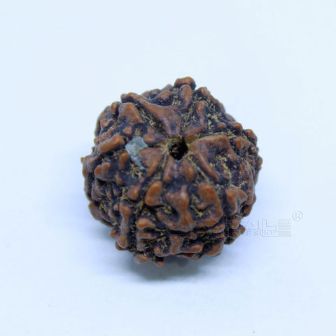 14.00mm to 20.00mm (approx) Natural 6 Face Rudraksha IGL certified - 6MKH_RDR_AJ25 - 1 Mukhi Rudraksha