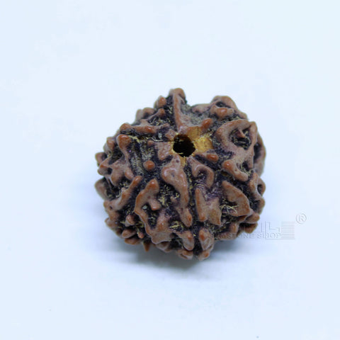 14.00mm to 20.00mm (approx) Natural 6 Face Rudraksha IGL certified - 6MKH_RDR_AJ26 - 1 Mukhi Rudraksha