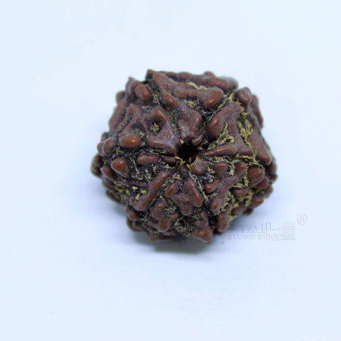 14.00mm to 20.00mm (approx) Natural 6 Face Rudraksha IGL certified - 6MKH_RDR_AJ27 - 1 Mukhi Rudraksha