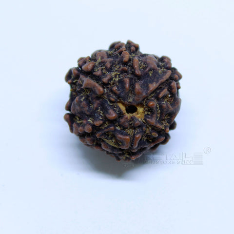 14.00mm to 20.00mm (approx) Natural 6 Face Rudraksha IGL certified - 6MKH_RDR_AJ3 - 1 Mukhi Rudraksha