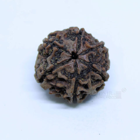 14.00mm to 20.00mm (approx) Natural 6 Face Rudraksha IGL certified - 6MKH_RDR_AJ31 - 1 Mukhi Rudraksha