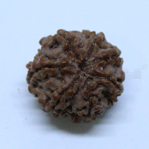 Natural 7 Mukhi Rudraksha 2.044gms | 17.68mm Certified by IGL buy online @ Ajretail - 1 Mukhi Rudraksha