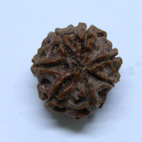 Natural 7 Mukhi Rudraksha 2.094gms | 17.60mm Certified by IGL buy online @ Ajretail - 1 Mukhi Rudraksha