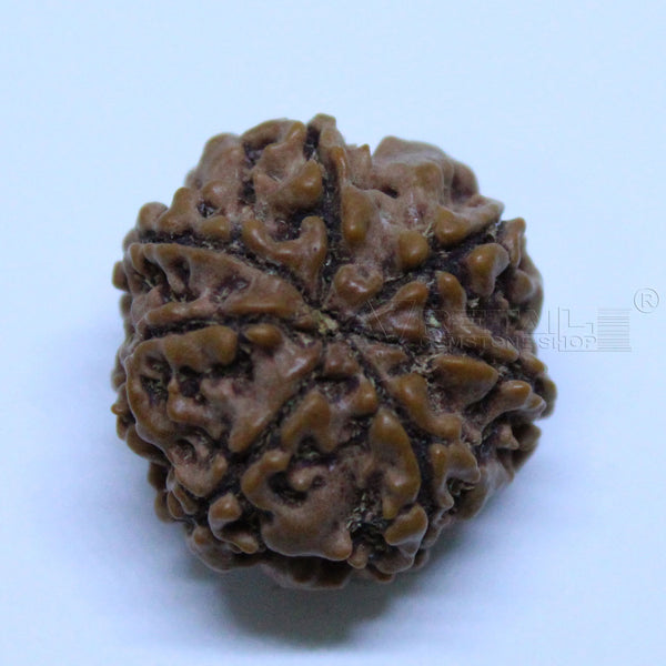 Natural 7 Mukhi Rudraksha 2.200gms | 19.08mm Certified by IGL buy online @ Ajretail - 1 Mukhi Rudraksha