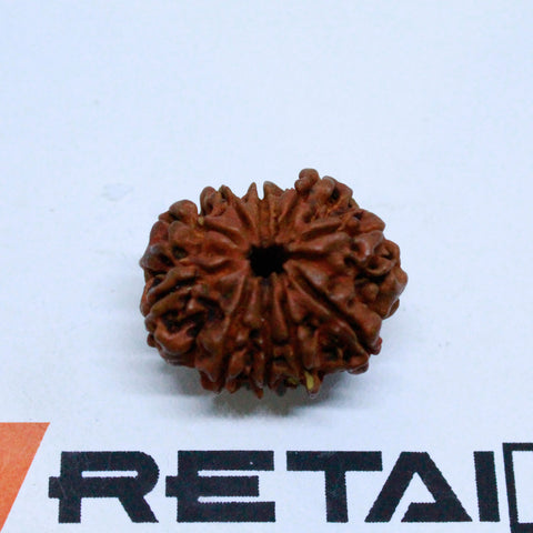 1.538gms  25.21mm 10 Face Energized Bead Natural 10 Mukhi Rudraksha from Nepal - 1 Mukhi Rudraksha