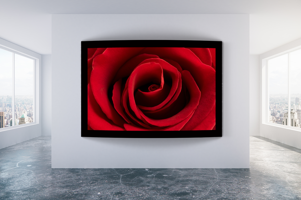 """Deep Red Rose"" - Art & Light"