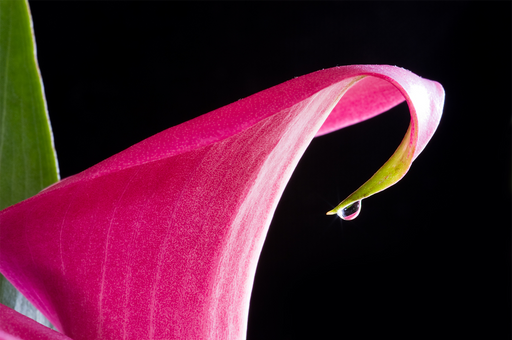 """Hot Pink Drop"" - Art & Light"