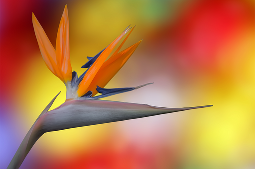"""Bird of Color"" - Art & Light"