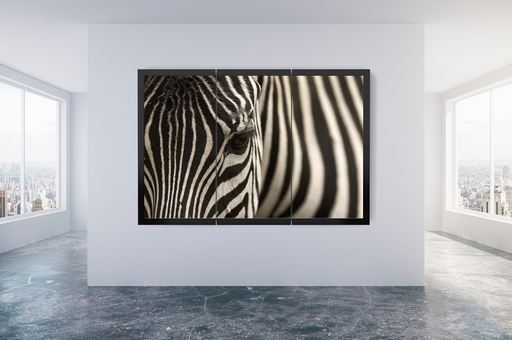 """Eye of the Zebra"" - Art & Light"